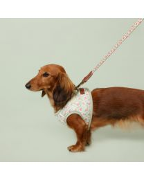 Provence Rose Comfort Walking Harness